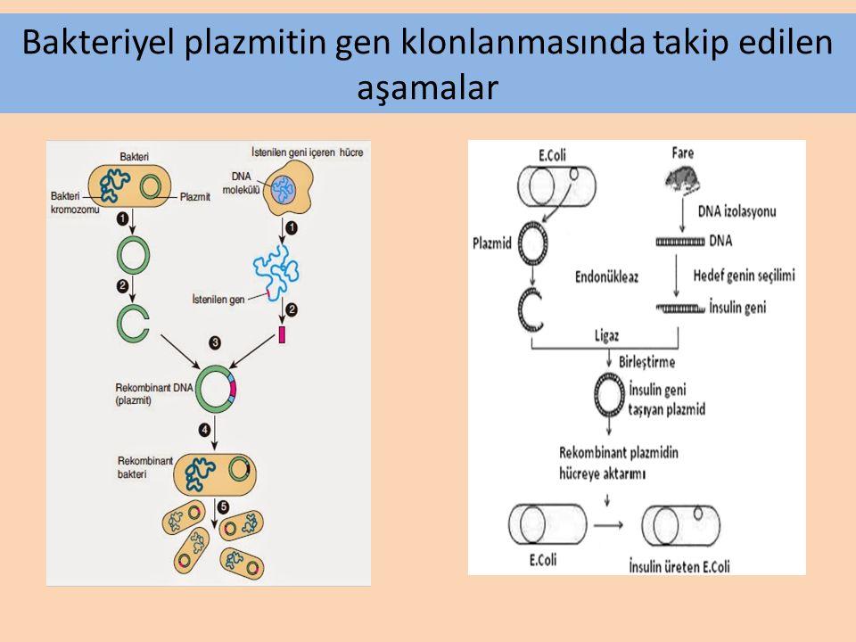 Bakteriyel plazmitin gen klonlanmasında takip edilen aşamalar