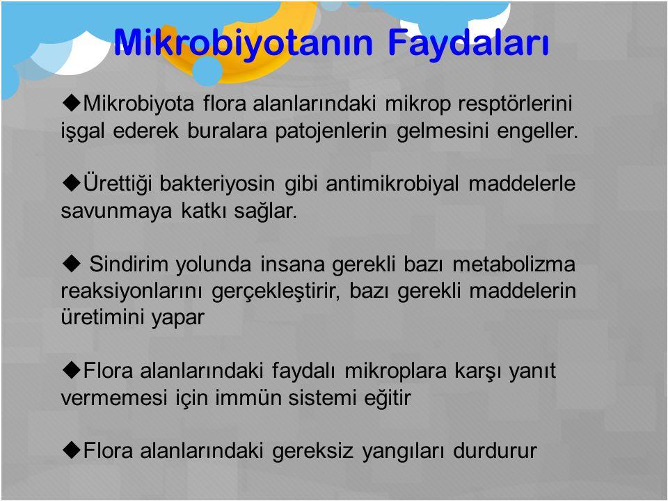 Mikrobiyotanın Faydaları