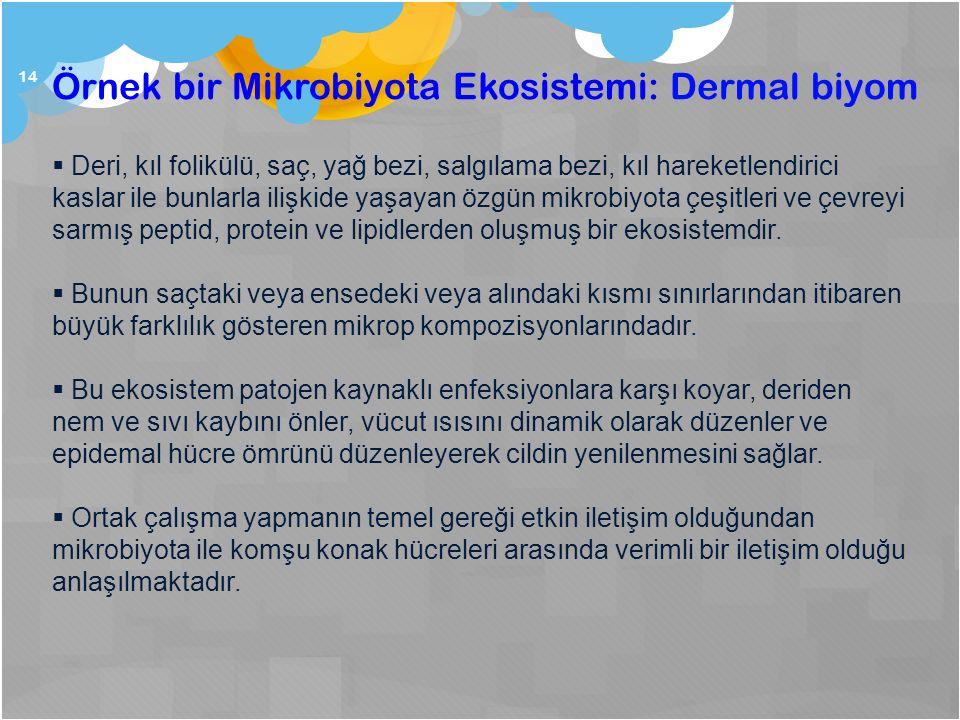 Örnek bir Mikrobiyota Ekosistemi: Dermal biyom