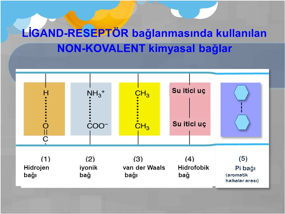 LİGAND-RESEPTÖR bağlanmasında kullanılan NON-KOVALENT kimyasal bağlar