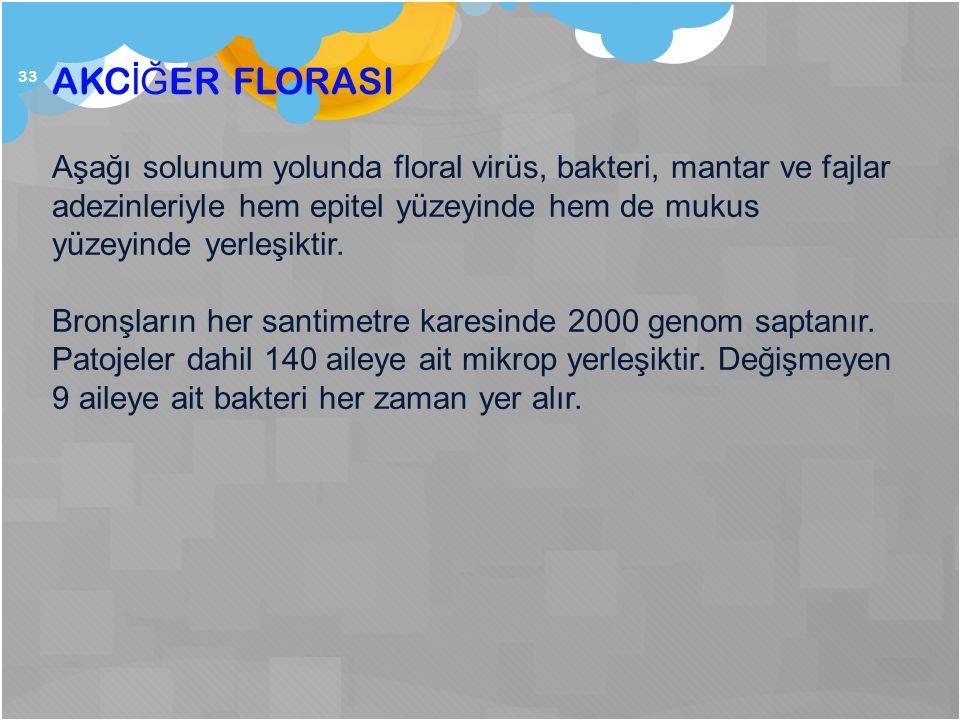 AKCİĞER FLORASI Aşağı solunum yolunda floral virüs, bakteri, mantar ve fajlar adezinleriyle hem epitel yüzeyinde hem de mukus yüzeyinde yerleşiktir.