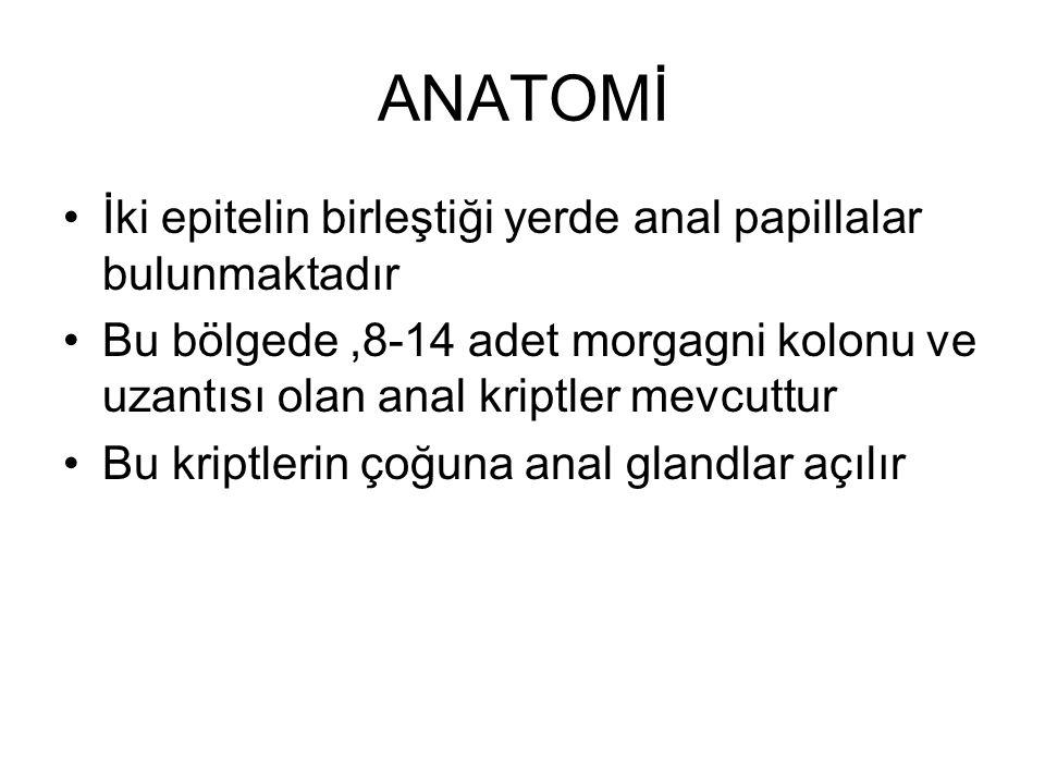 ANATOMİ İki epitelin birleştiği yerde anal papillalar bulunmaktadır