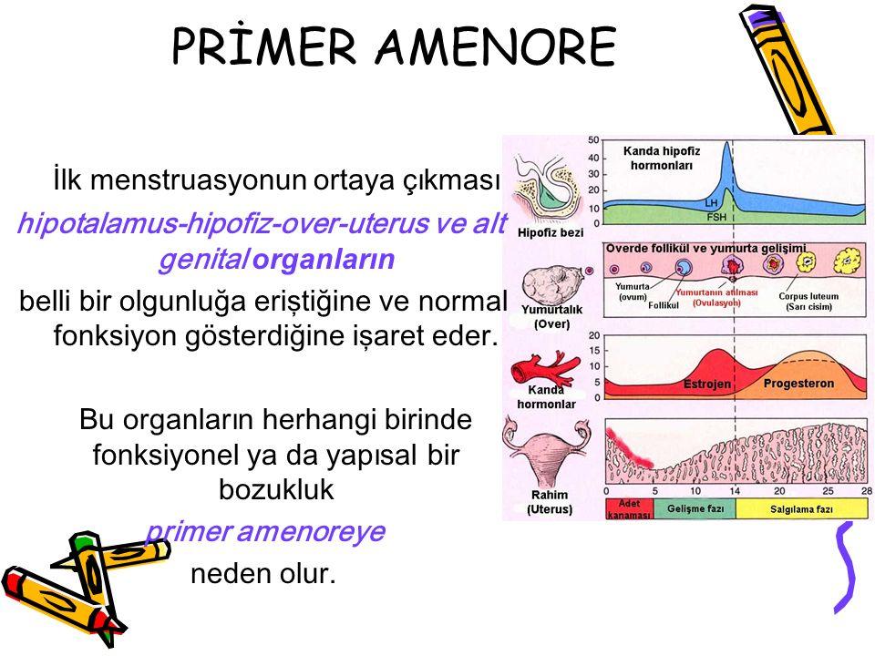 hipotalamus-hipofiz-over-uterus ve alt genital organların