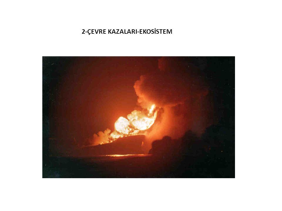 Nassia kazası (1994) 2-ÇEVRE KAZALARI-EKOSİSTEM