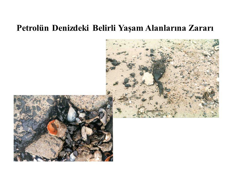 Petrolün Denizdeki Belirli Yaşam Alanlarına Zararı
