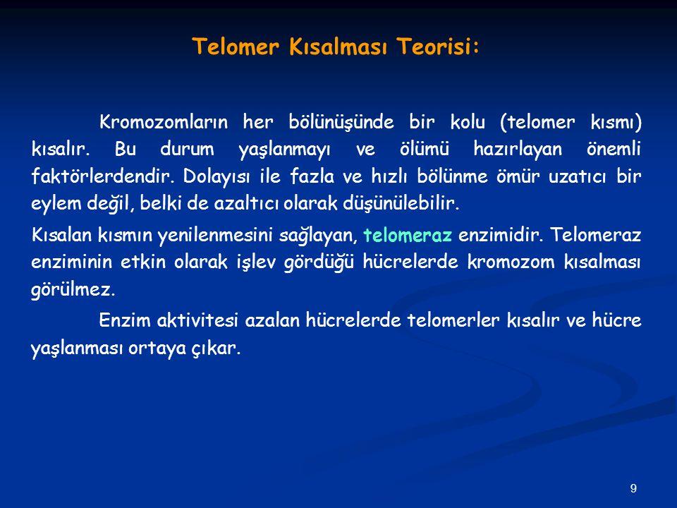 Telomer Kısalması Teorisi:
