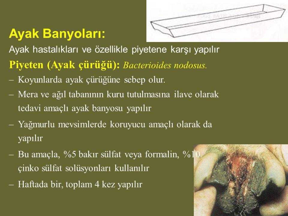 Ayak Banyoları: Piyeten (Ayak çürüğü): Bacterioides nodosus.