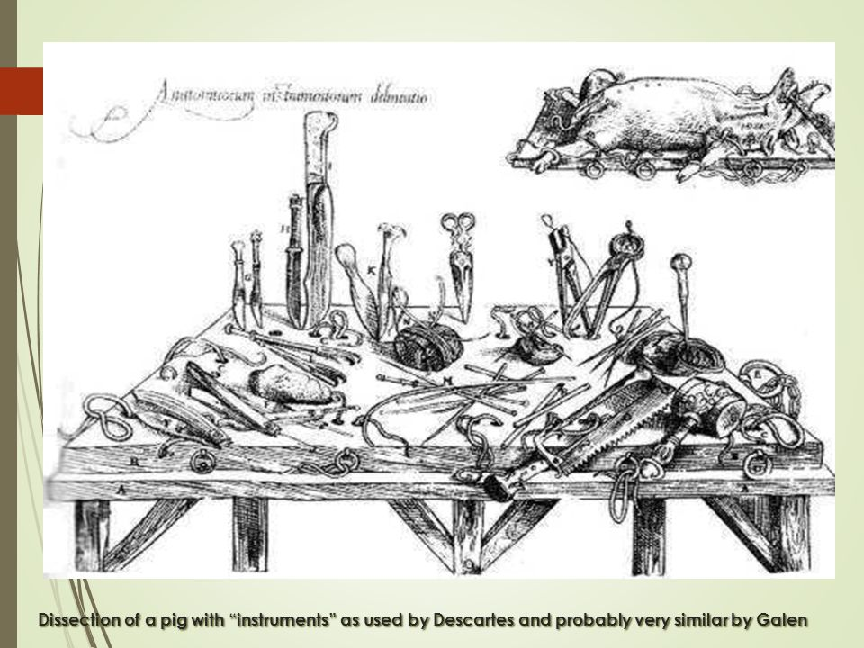 Dissection of a pig with instruments as used by Descartes and probably very similar by Galen