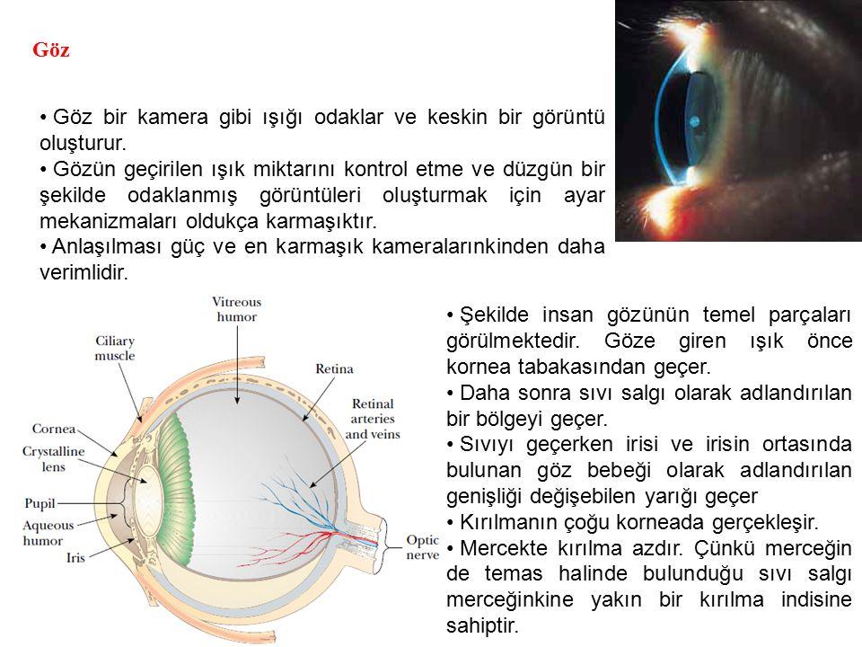 Göz Göz bir kamera gibi ışığı odaklar ve keskin bir görüntü oluşturur.