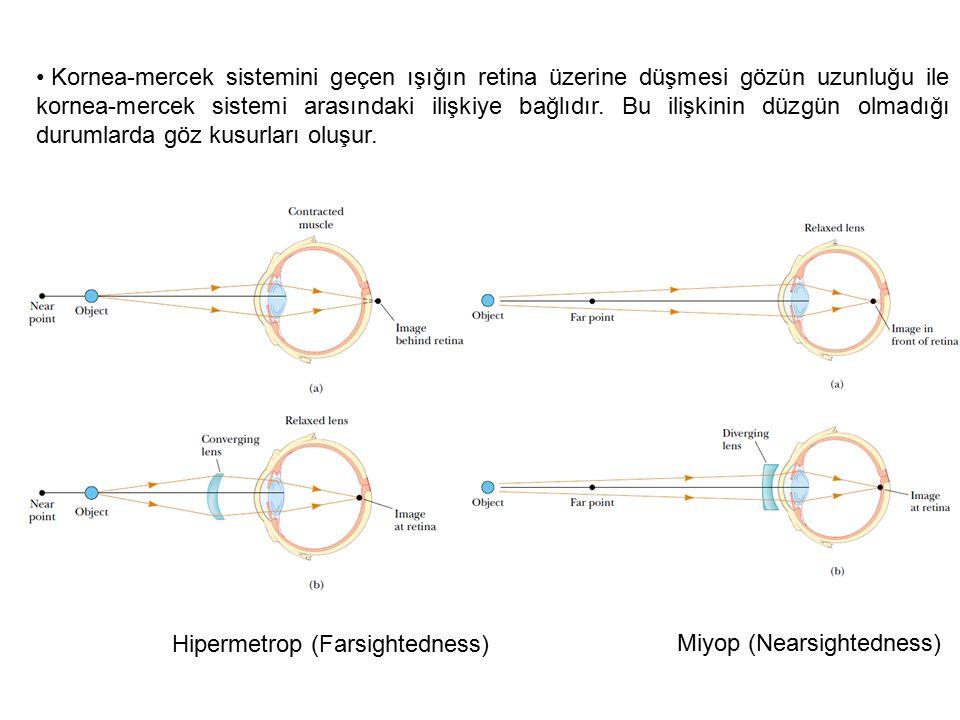 Kornea-mercek sistemini geçen ışığın retina üzerine düşmesi gözün uzunluğu ile kornea-mercek sistemi arasındaki ilişkiye bağlıdır. Bu ilişkinin düzgün olmadığı durumlarda göz kusurları oluşur.