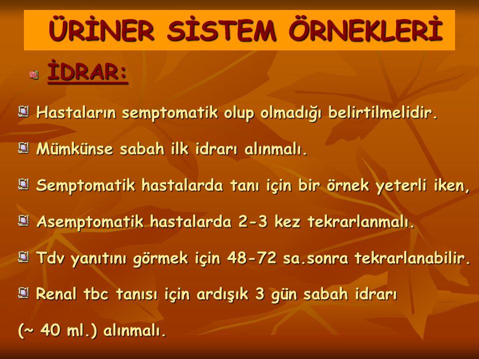 ÜRİNER SİSTEM ÖRNEKLERİ