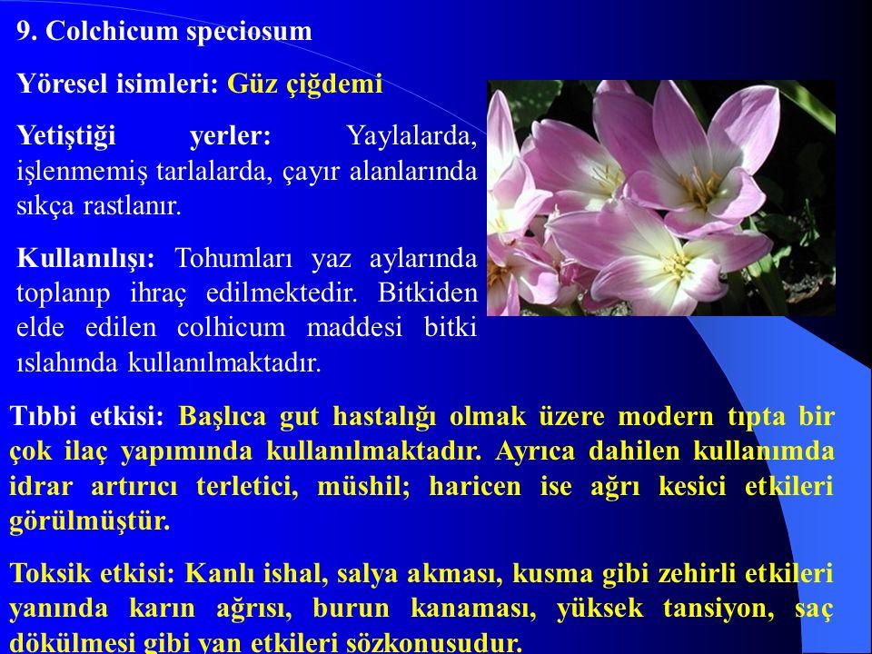 9. Colchicum speciosum Yöresel isimleri: Güz çiğdemi. Yetiştiği yerler: Yaylalarda, işlenmemiş tarlalarda, çayır alanlarında sıkça rastlanır.