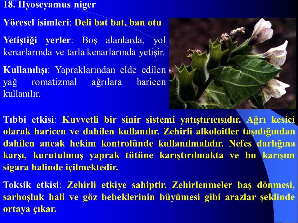 18. Hyoscyamus niger Yöresel isimleri: Deli bat bat, ban otu. Yetiştiği yerler: Boş alanlarda, yol kenarlarında ve tarla kenarlarında yetişir.