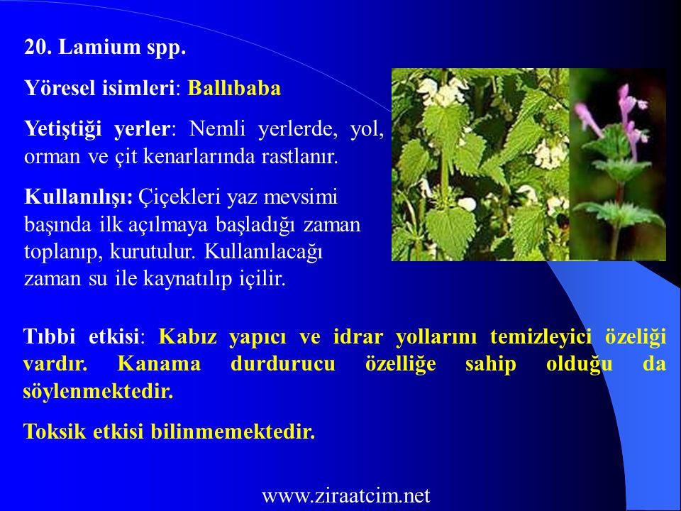 20. Lamium spp. Yöresel isimleri: Ballıbaba. Yetiştiği yerler: Nemli yerlerde, yol, orman ve çit kenarlarında rastlanır.