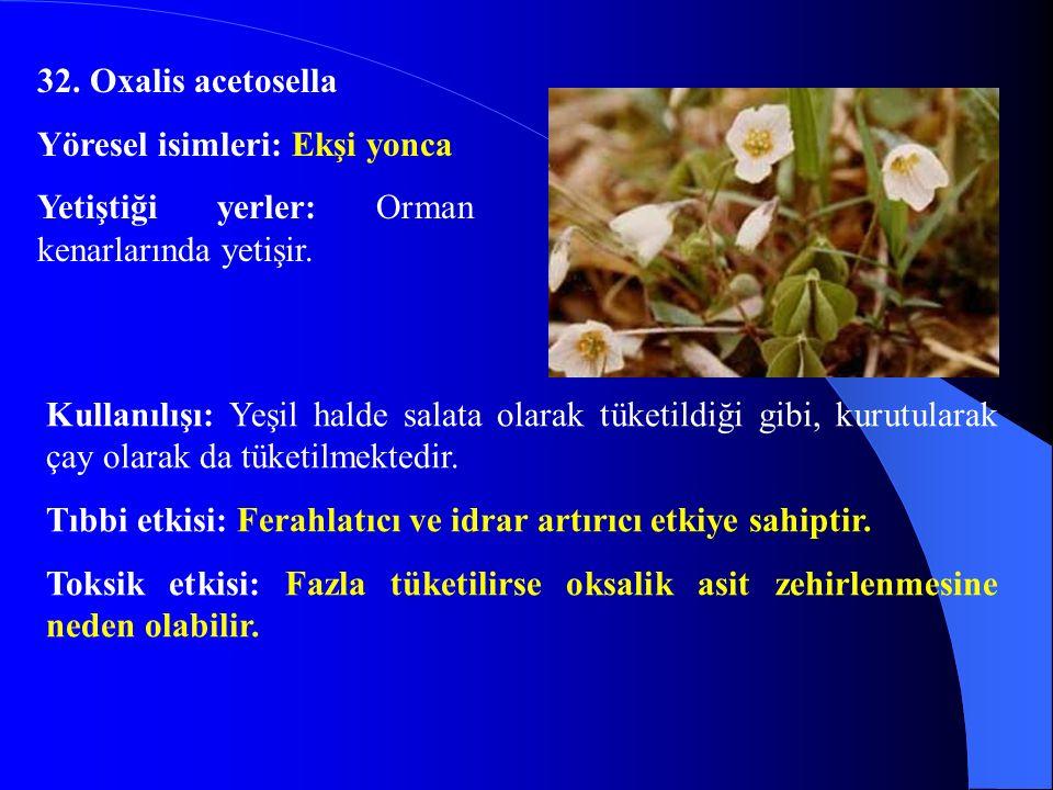 32. Oxalis acetosella Yöresel isimleri: Ekşi yonca. Yetiştiği yerler: Orman kenarlarında yetişir.