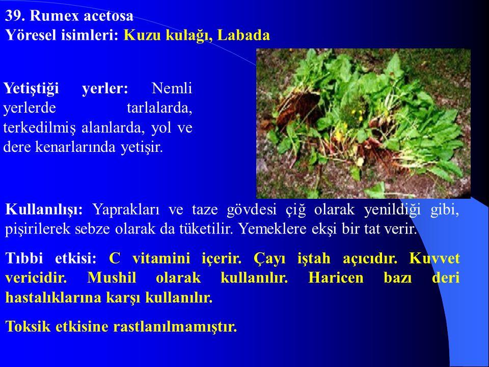 39. Rumex acetosa Yöresel isimleri: Kuzu kulağı, Labada.