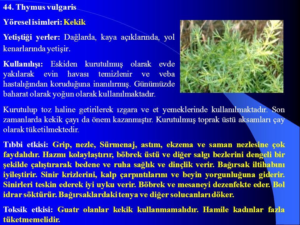 44. Thymus vulgaris Yöresel isimleri: Kekik. Yetiştiği yerler: Dağlarda, kaya açıklarında, yol kenarlarında yetişir.