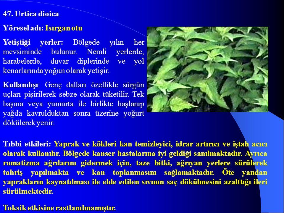 47. Urtica dioica Yöresel adı: Isırgan otu.