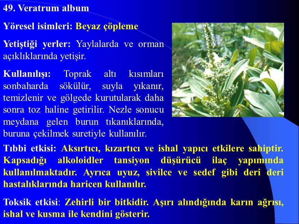 49. Veratrum album Yöresel isimleri: Beyaz çöpleme. Yetiştiği yerler: Yaylalarda ve orman açıklıklarında yetişir.