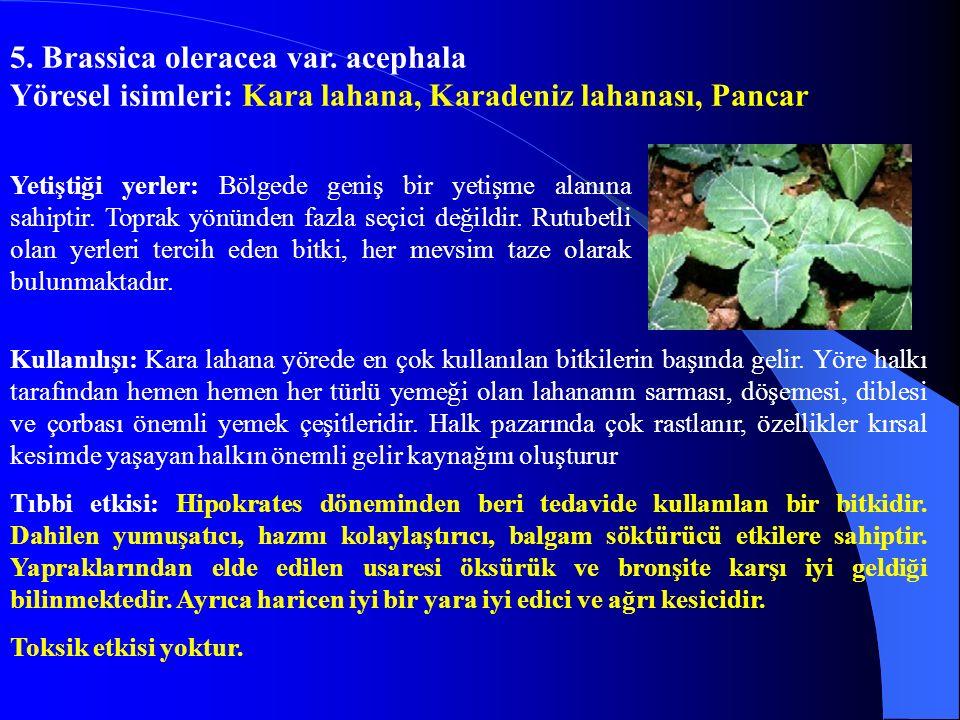 5. Brassica oleracea var. acephala