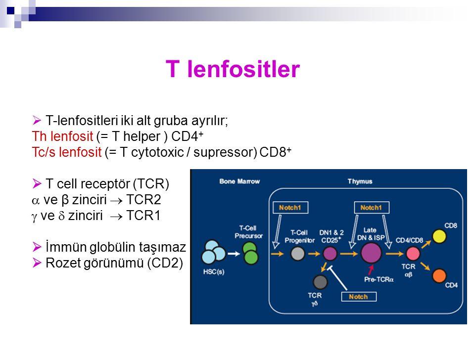 T lenfositler  T-lenfositleri iki alt gruba ayrılır;
