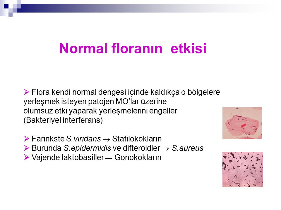Normal floranın etkisi