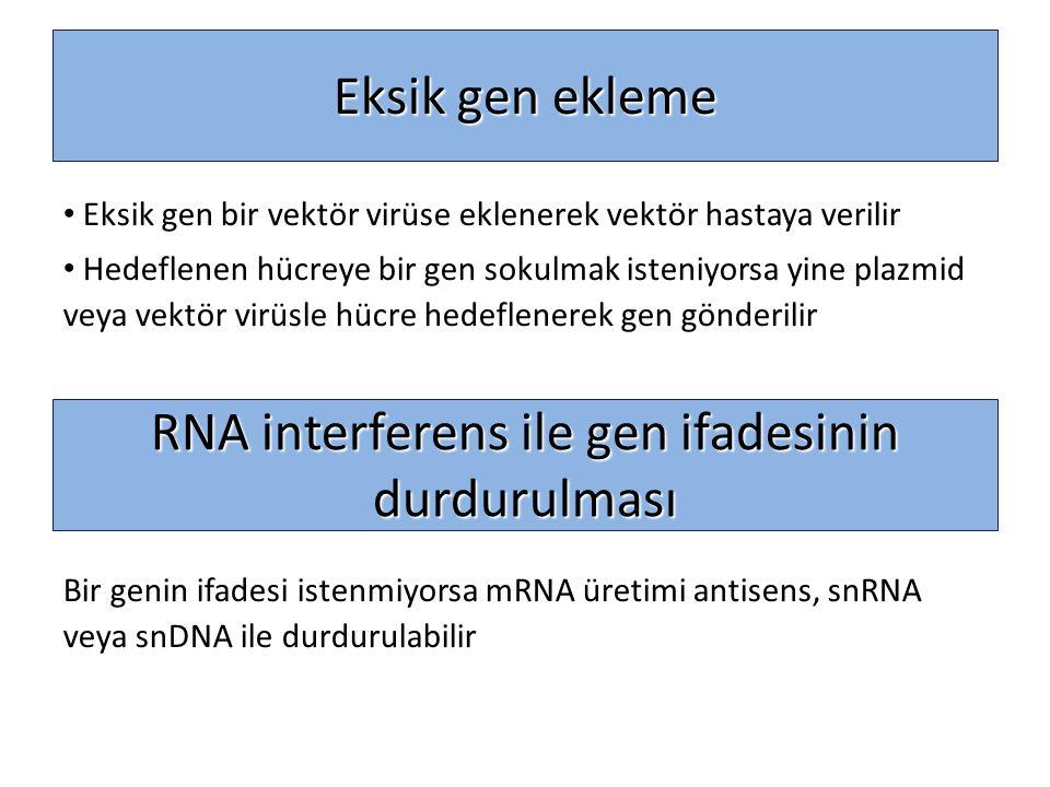 RNA interferens ile gen ifadesinin durdurulması