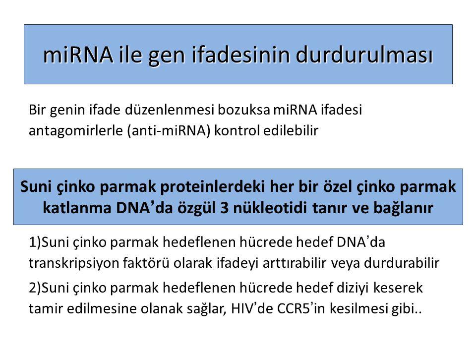 miRNA ile gen ifadesinin durdurulması