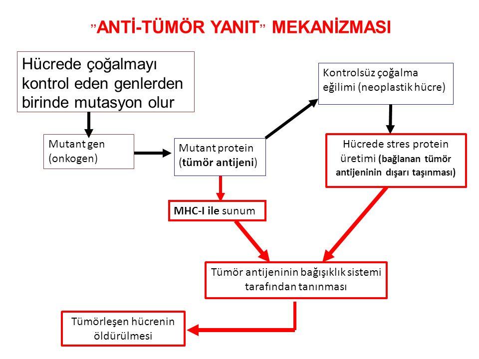 ''ANTİ-TÜMÖR YANIT'' MEKANİZMASI