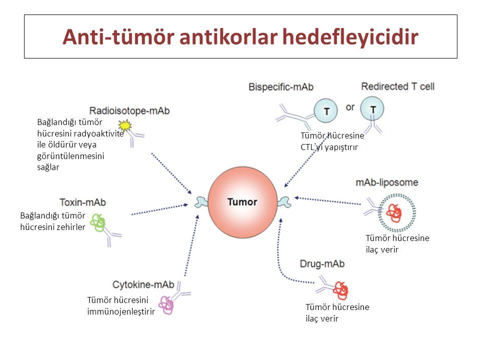 Anti-tümör antikorlar hedefleyicidir