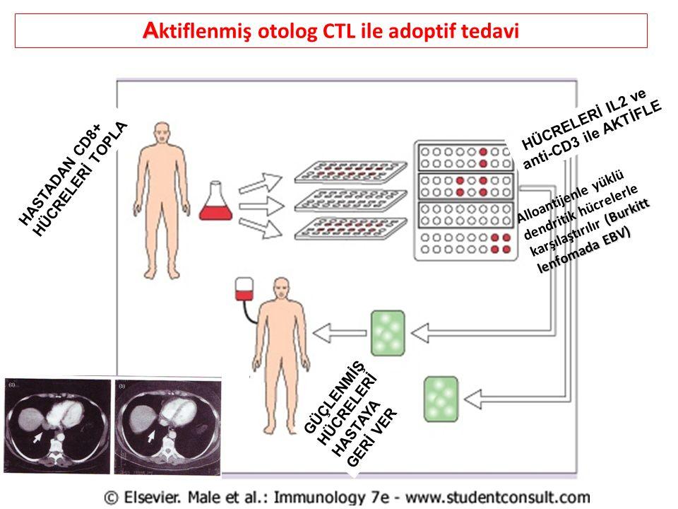 Aktiflenmiş otolog CTL ile adoptif tedavi