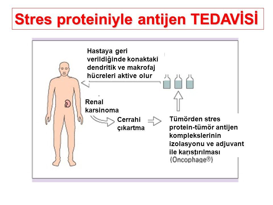 Stres proteiniyle antijen TEDAVİSİ