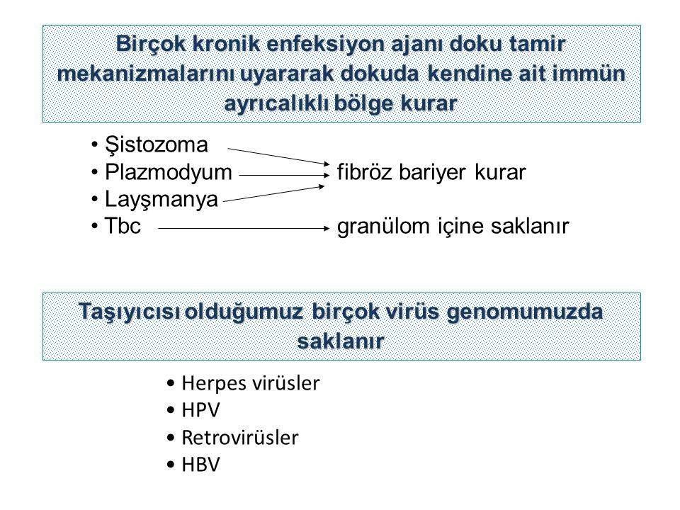 Taşıyıcısı olduğumuz birçok virüs genomumuzda saklanır