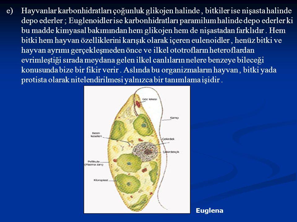 Hayvanlar karbonhidratları çoğunluk glikojen halinde , bitkiler ise nişasta halinde depo ederler ; Euglenoidler ise karbonhidratları paramilum halinde depo ederler ki bu madde kimyasal bakımından hem glikojen hem de nişastadan farklıdır . Hem bitki hem hayvan özelliklerini karışık olarak içeren eulenoidler , henüz bitki ve hayvan ayrımı gerçekleşmeden önce ve ilkel ototrofların heteroflardan evrimleştiği sırada meydana gelen ilkel canlıların nelere benzeye bileceği konusunda bize bir fikir verir . Aslında bu organizmaların hayvan , bitki yada protista olarak nitelendirilmesi yalnızca bir tanımlama işidir .