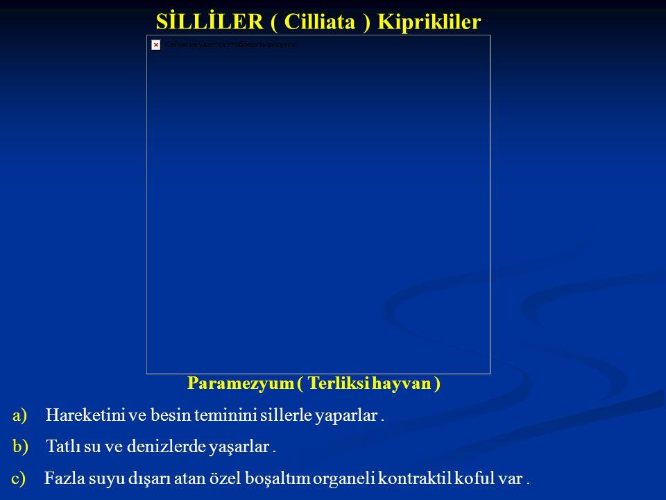 SİLLİLER ( Cilliata ) Kiprikliler