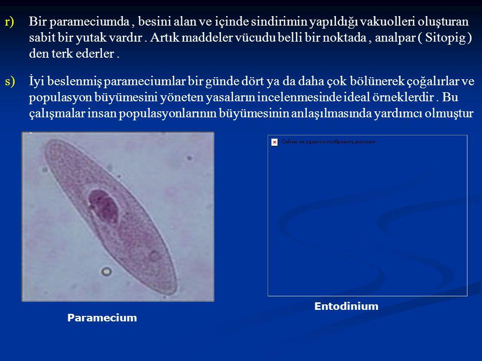 Bir parameciumda , besini alan ve içinde sindirimin yapıldığı vakuolleri oluşturan sabit bir yutak vardır . Artık maddeler vücudu belli bir noktada , analpar ( Sitopig ) den terk ederler .