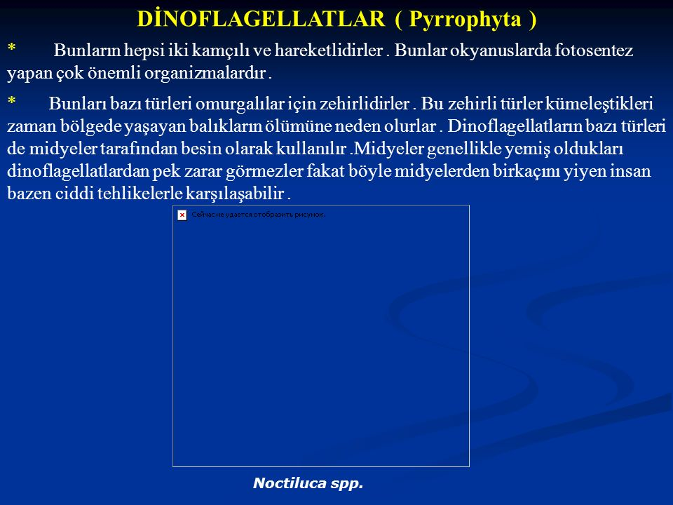DİNOFLAGELLATLAR ( Pyrrophyta )