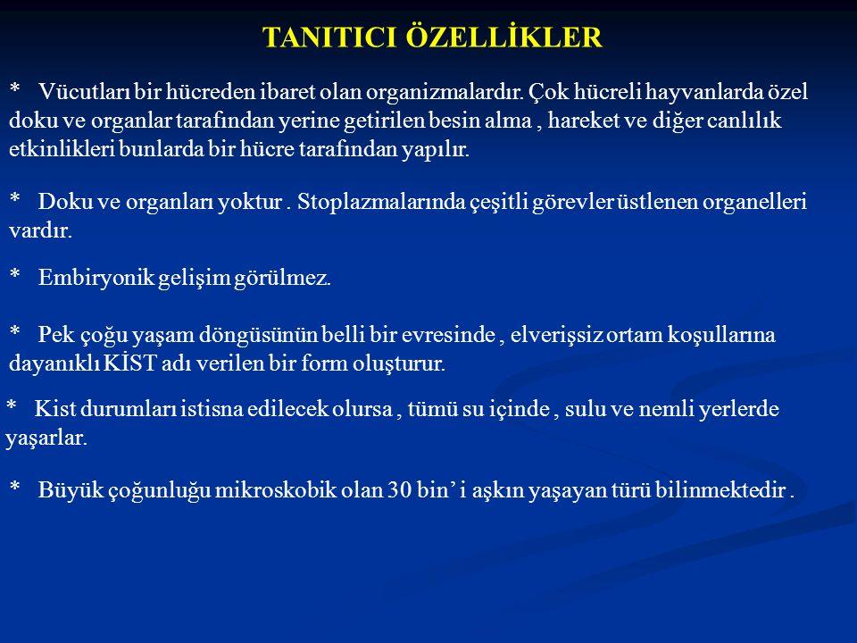 TANITICI ÖZELLİKLER