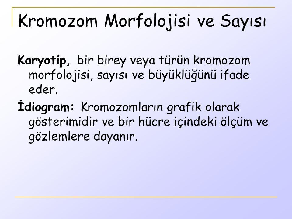 Kromozom Morfolojisi ve Sayısı