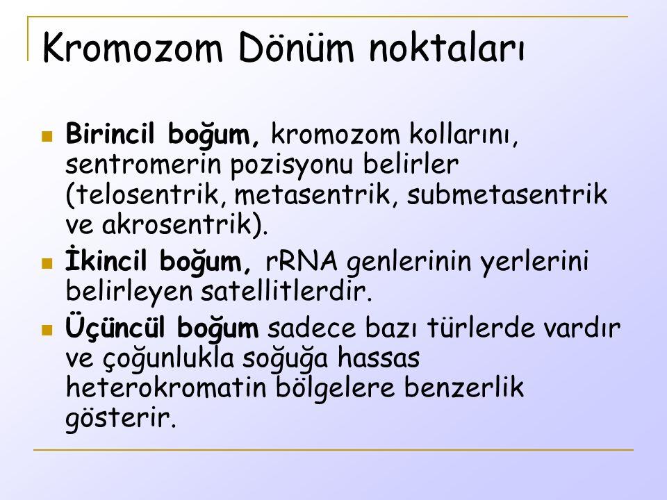 Kromozom Dönüm noktaları