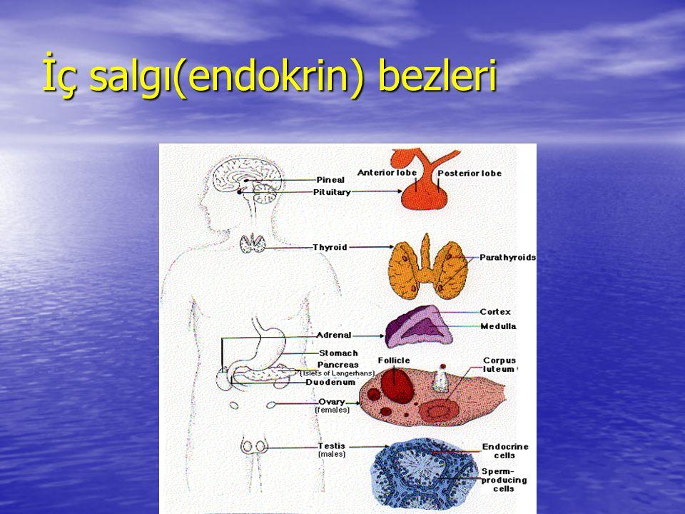 İç salgı(endokrin) bezleri
