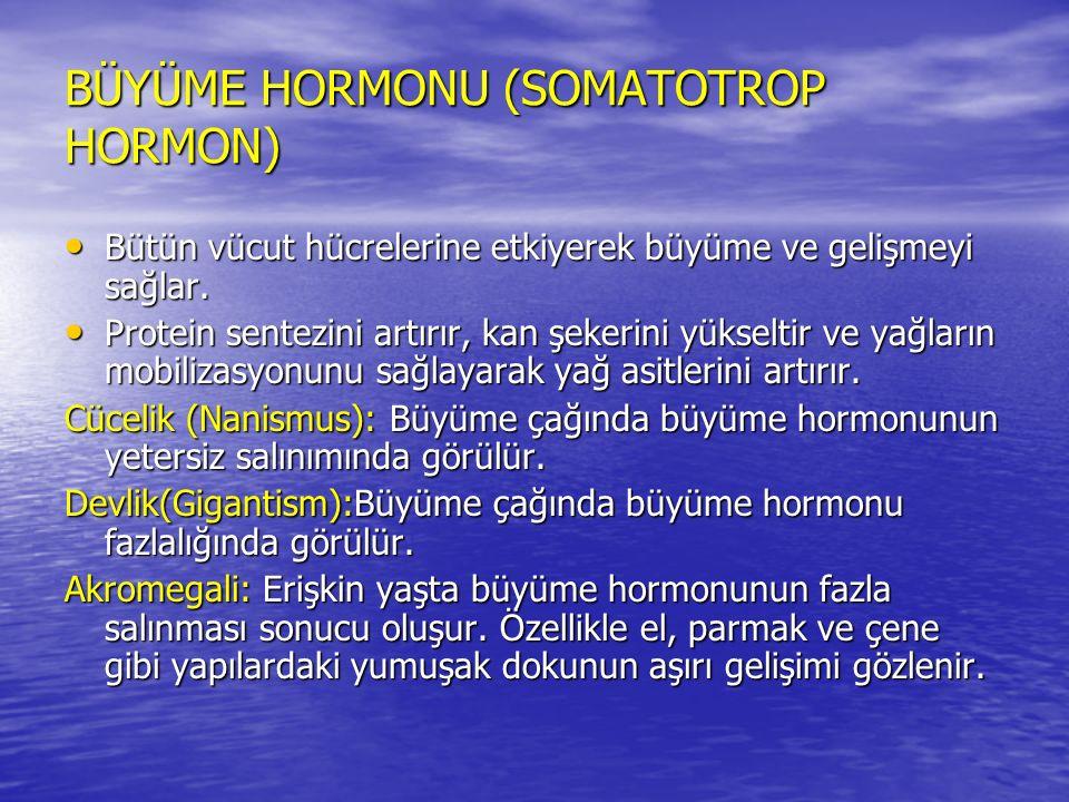 BÜYÜME HORMONU (SOMATOTROP HORMON)