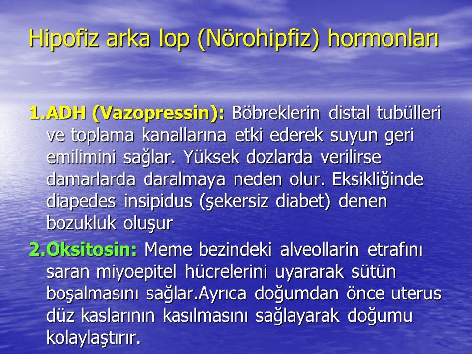 Hipofiz arka lop (Nörohipfiz) hormonları