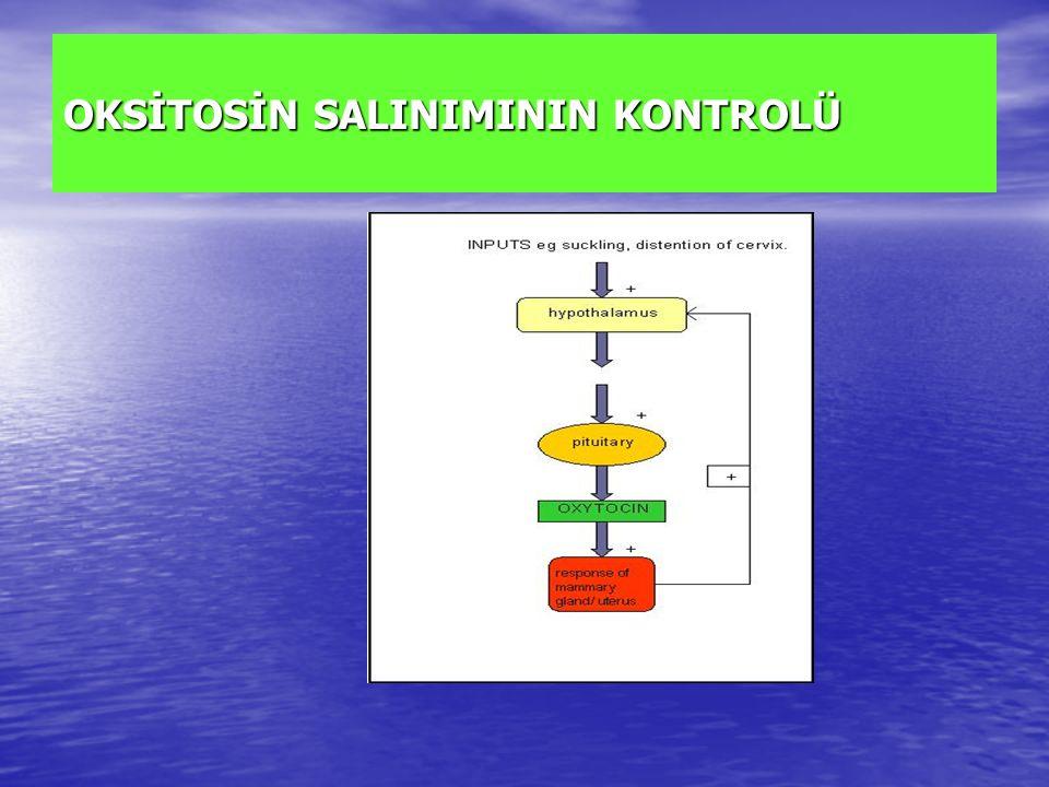 OKSİTOSİN SALINIMININ KONTROLÜ