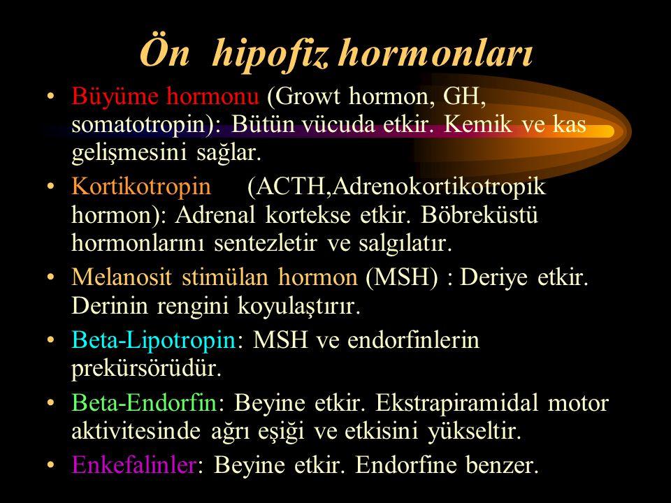 Ön hipofiz hormonları Büyüme hormonu (Growt hormon, GH, somatotropin): Bütün vücuda etkir. Kemik ve kas gelişmesini sağlar.