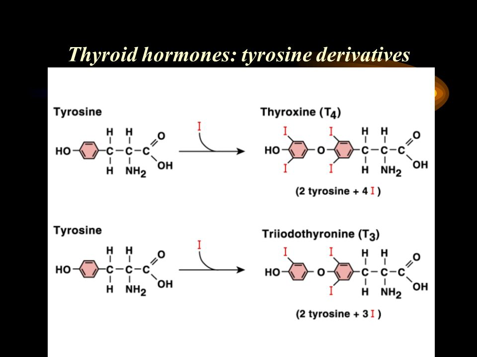 Thyroid hormones: tyrosine derivatives