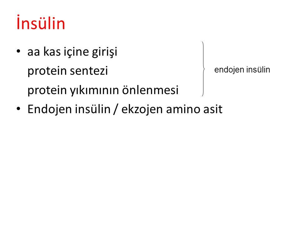 İnsülin aa kas içine girişi protein sentezi