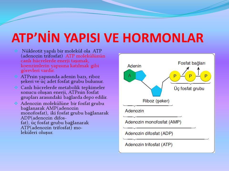 ATP'NİN YAPISI VE HORMONLAR