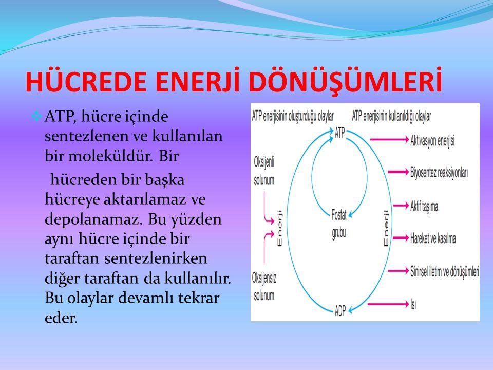 HÜCREDE ENERJİ DÖNÜŞÜMLERİ