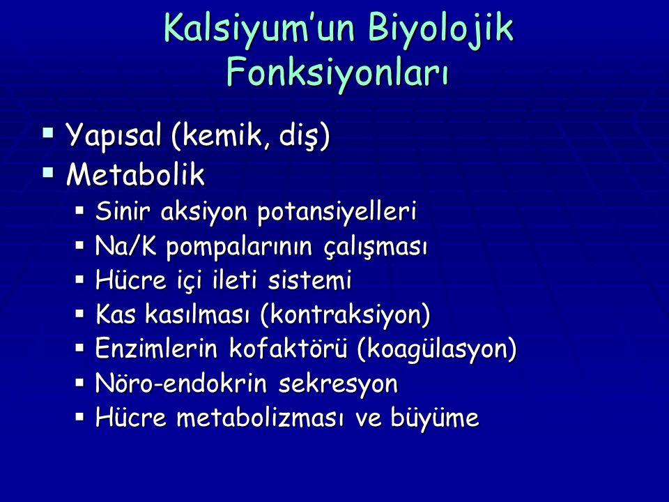 Kalsiyum'un Biyolojik Fonksiyonları